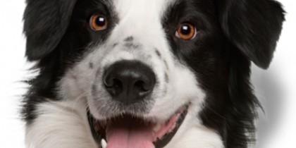 Warwick Run Animal Clinic