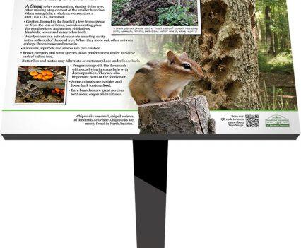 Landis Woods Park Nature Trail